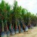 Pegiat Lingkungan Berharap Moratorium Sawit Diperpanjang